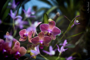 Orchids (V). by Phototubby
