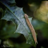 Butterfly caterpillar (II). by Phototubby