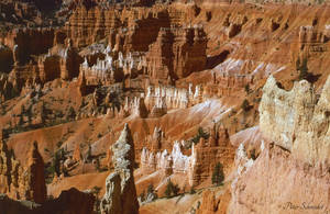 Bryce canyon. by Phototubby