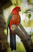 Birds,birds,birds (VI). by Phototubby