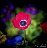 Return of the colour. by Phototubby