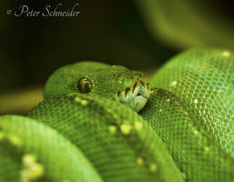 Green. by Phototubby
