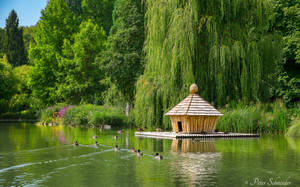 The duck house. by Phototubby