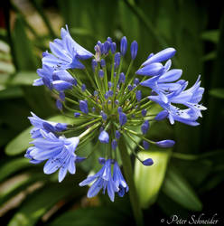Blue. by Phototubby