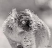 Kata. by Phototubby