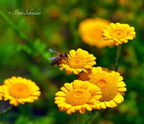 Summer meadow (II). by Phototubby