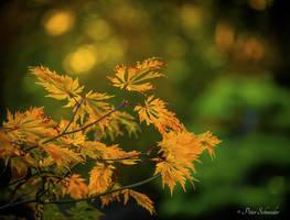 Autumn (VII). by Phototubby