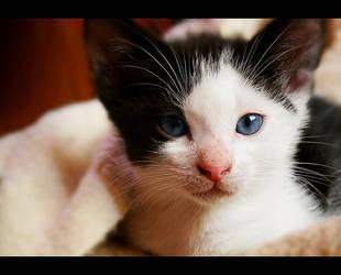 5 weeks old cat emma by JennyLne