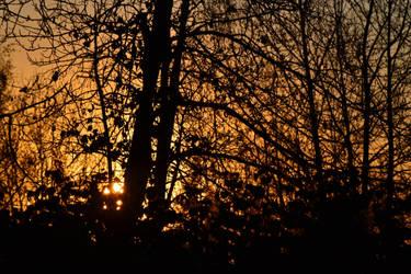 Silhouette by BasementAyeluss