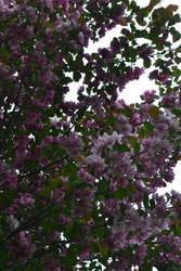 Tree Flowers by BasementAyeluss