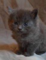 Kitten by eilennA
