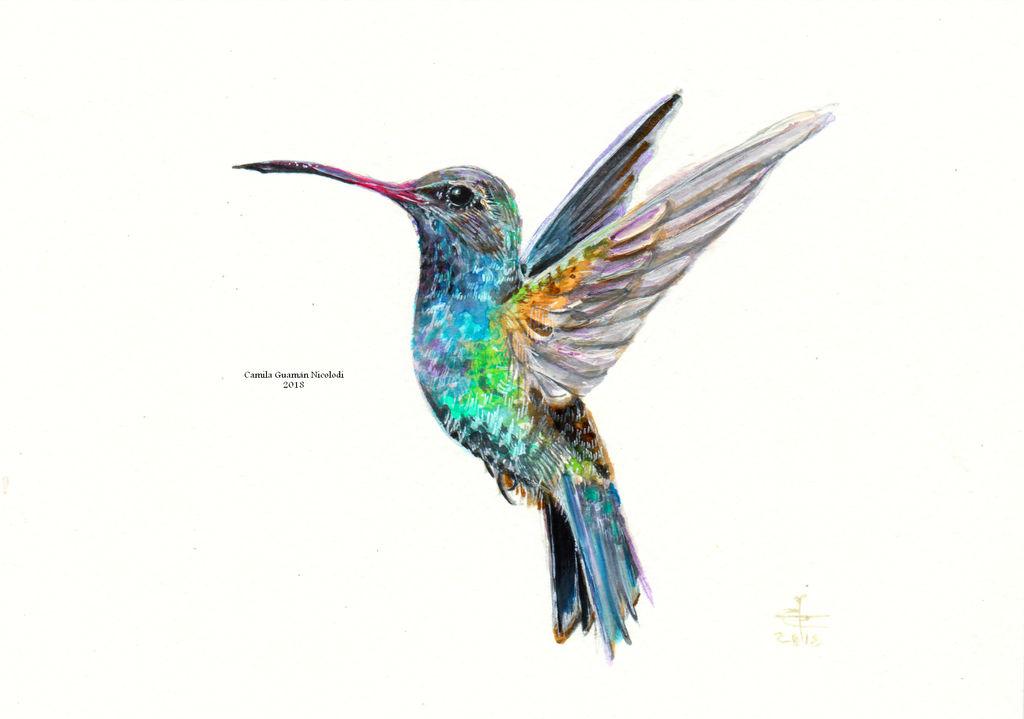 Colibri by chinchillacosmica