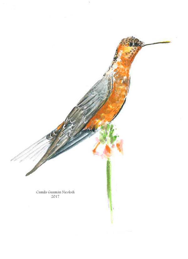 Colibri Gigante by chinchillacosmica