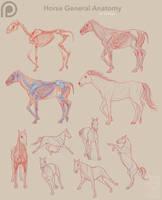 Patreon - Horse Anatomy 02 by Simkaye