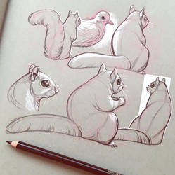 Squirrel Life Drawing by Simkaye