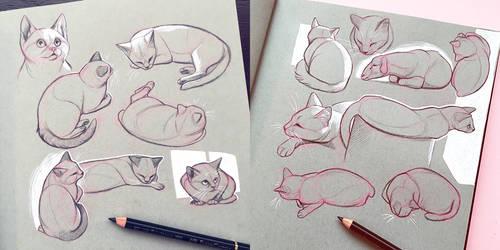 Cat Life Drawing by Simkaye