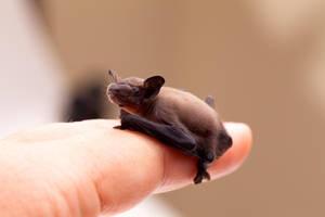 Tiny Bat! by catdragon4
