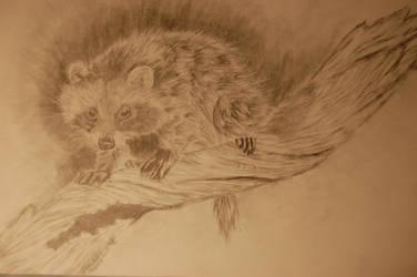 Baby Raccoon by Ravz689