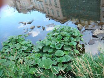 Lake leaves by spyros07