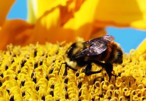 Bumble Bee by Joe-Lynn-Design