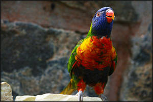 Colourful parrot by Spring-Blossom