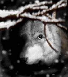 Silent Watch by Tiggress