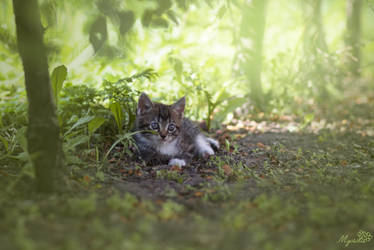 Kitty in the jungle by MyosotisPhoto