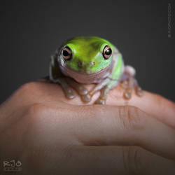 The Frog Lady by rekit