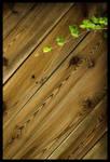 Wooden Lines by Sehbeben