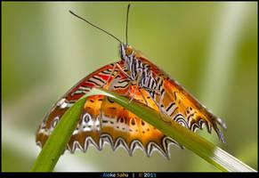Red Lacewing - III by alokethebloke