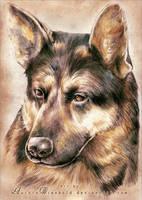 German Shepherd by RoryonaRainbow