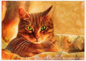 Cat at sunset by RoryonaRainbow