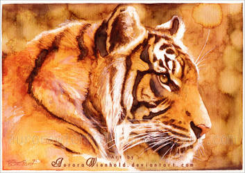 Tiger by RoryonaRainbow