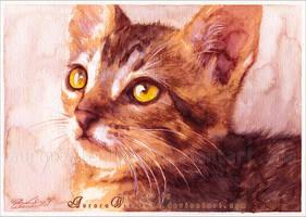 Tom the cat by RoryonaRainbow