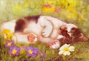 Murz the cat by RoryonaRainbow