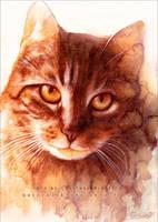 Paul the Cat by RoryonaRainbow