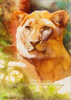 The lioness - watercolor study by RoryonaRainbow