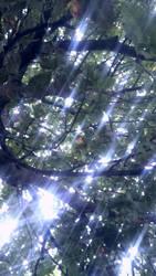 tree and light by ENGELSEINEFRAU