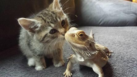 Kitten kissed the bearded dragon by ENGELSEINEFRAU