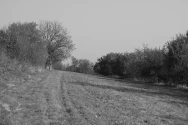 Grass field by Gadyn