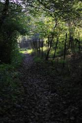 Path by Gadyn