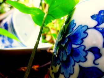 Teacups in the Jungle by xjamiee