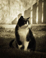 Cat by laca-sz