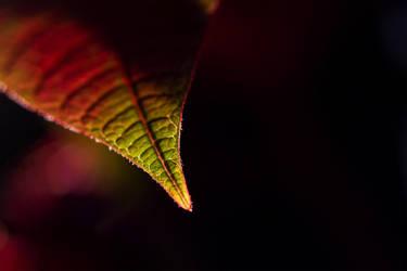 Leaf me by azzazelbg