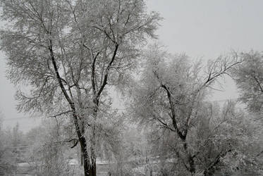 Frosty Day by Mountaineer47
