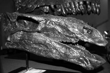 Stegosaurus stenops by Mountaineer47