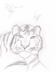 Epic Tiger by ShadowHawk04