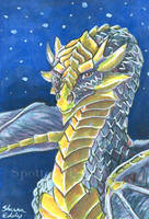 The Blue Dragon ACEO by SpottedPegasus