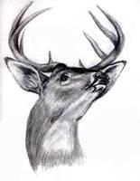 Deer by SpottedPegasus