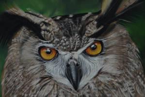 eurasian eagle owl (bubo bubo) by riksons